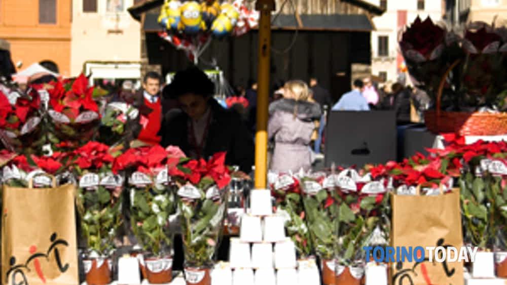 Prezzo Stella Di Natale Ail.Stelle Di Natale Ail Piazze Torino Il 7 8 E 9 Dicembre 2018