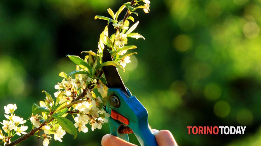 Come potare le piante da frutto a Viridea, Settimo Eventi a Torino