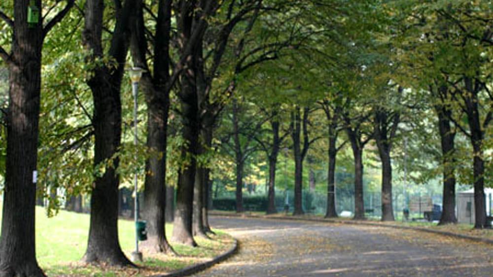 mutuo acquisto alberi da parte del comune